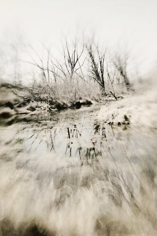 Winter Textured  Trees Trina Baker Photography