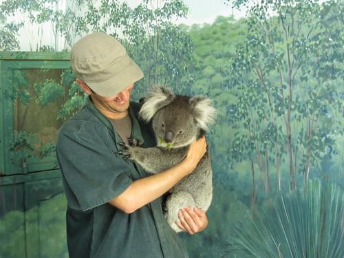 koala huggin 2