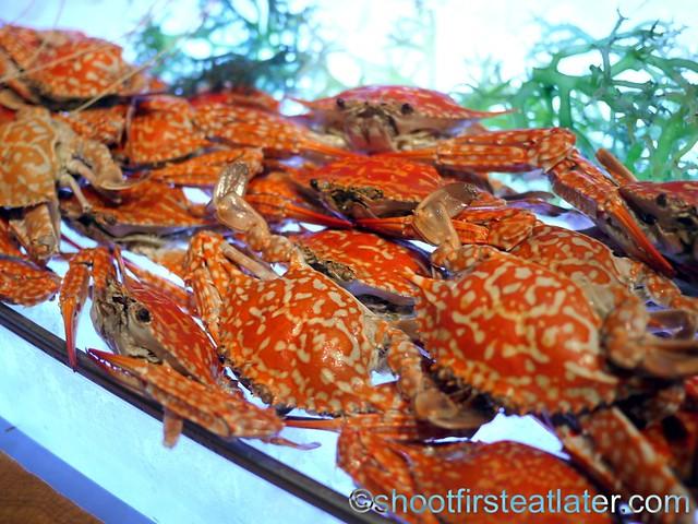 alimasag or blue crab