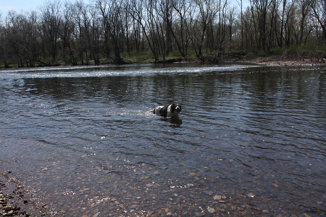 Dog + River=Happiness