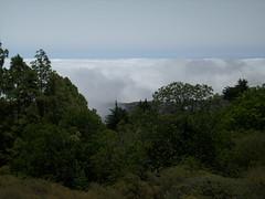 Alguien dijo una vez que en Gran Canaria no hay mar de nubes...