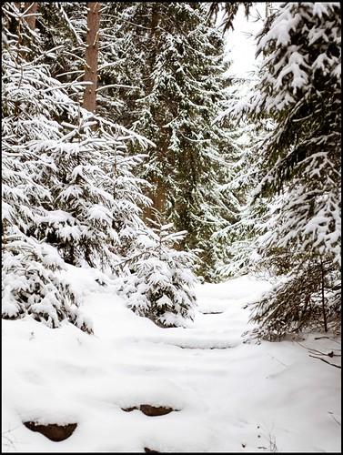 Pfad im Schnee