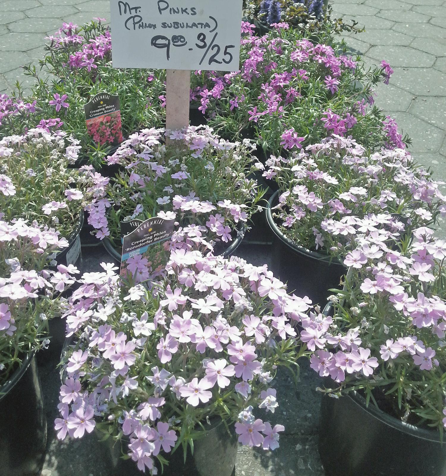 usq-flowers-3