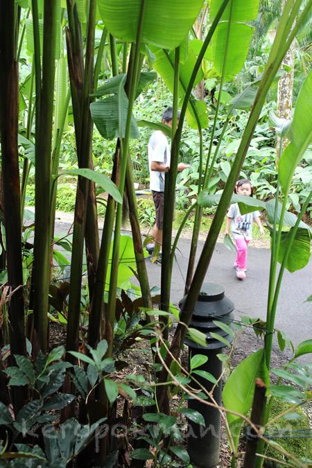Weekend Brunch @ Halia, Singapore Botanic Gardens