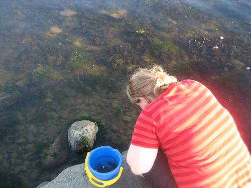 Crab fishing in Steninge