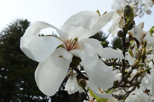 2013-4-20 spring 45