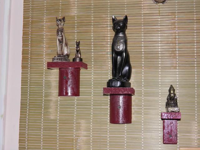 Кошки // Cats