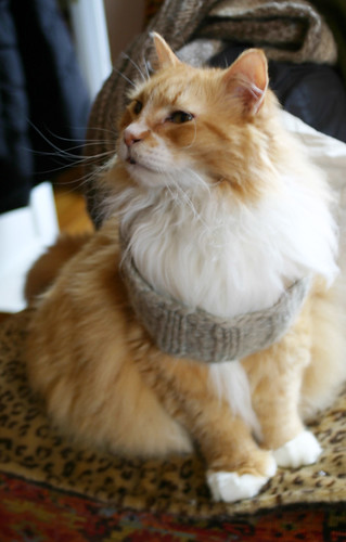 Jack cat captured by a knit headband