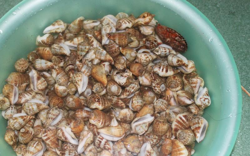 Kết quả hình ảnh cho ốc biển