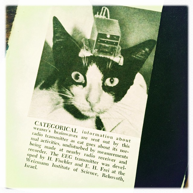 cat clip