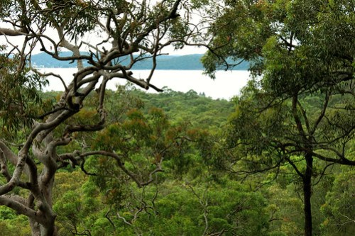 Brisbane Water National Park photo