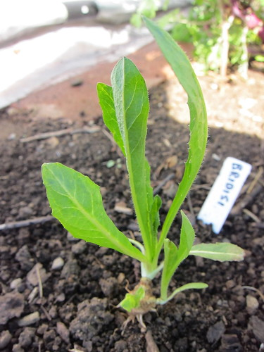 4.22.13 Garden Emerging