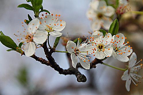 Flores #DePaseoConLarri #Photography  22