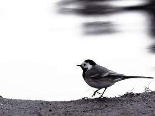 I'm a Bird Yes I Am