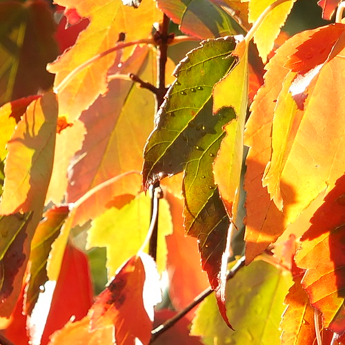 Autumn colours by Patricia Manhire