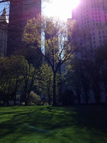 Springtime in Madison Park by Dan Nguyen @ New York City