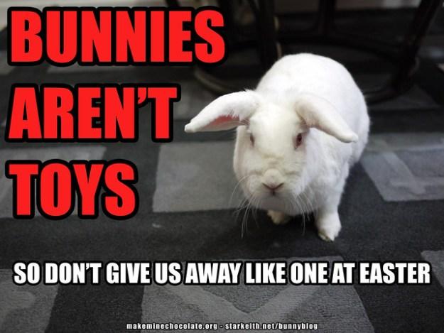 gus - bunnies aren't toys