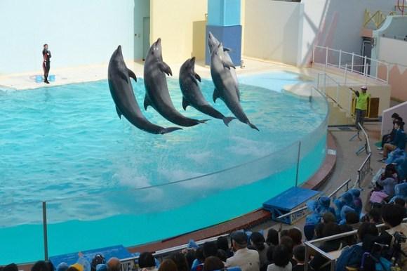 130330_dolphin01