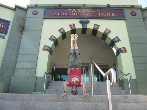 24. taronga zoo headstand