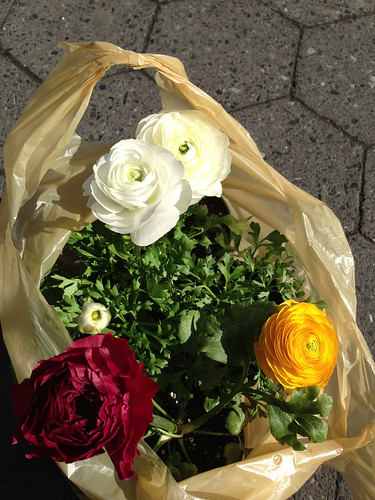 A bag of ranunculuses