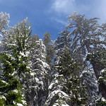 Majestic British Columbia Winter