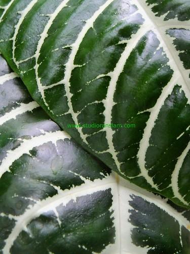 Tropical Textures (2)