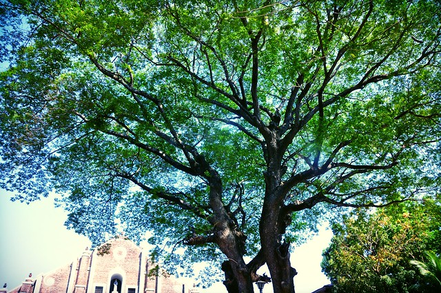 A tree in the summer