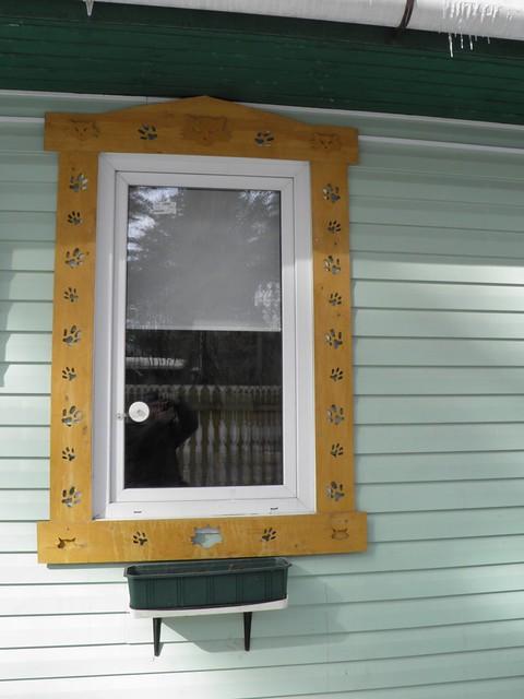 Окно музея кошки // Window of cat museum