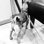 Dog butt #iPhone
