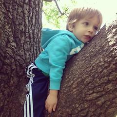 #treehugger