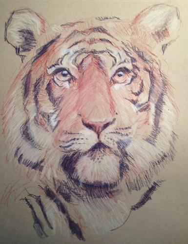 Tiger by husdant