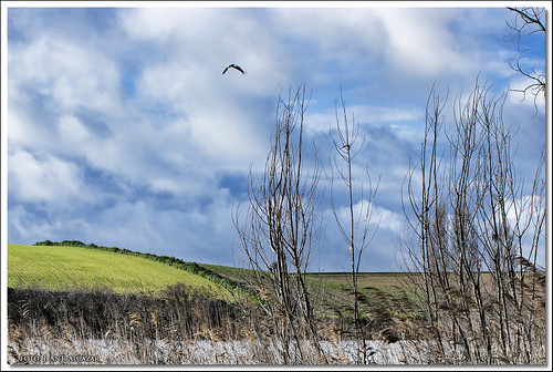 sobrevolando la primavera by dedaimiel