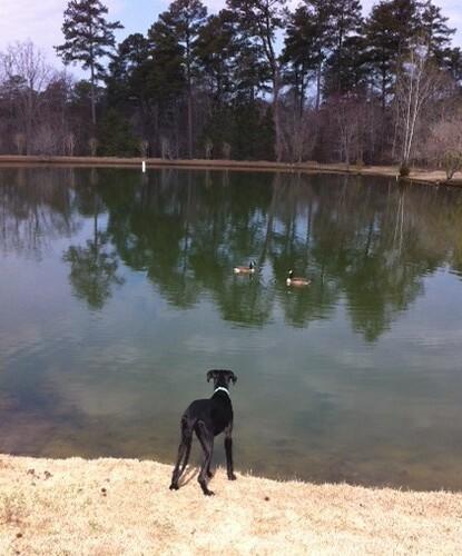 zoey by pond