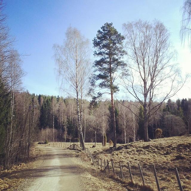 Morning stroll.
