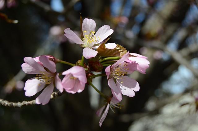 2013-4-20 spring 210
