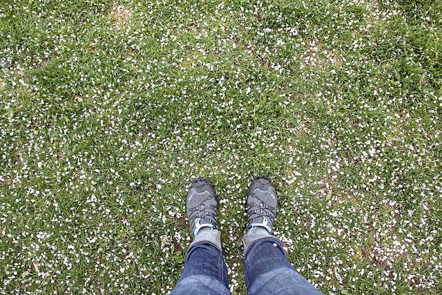 it's raining petals