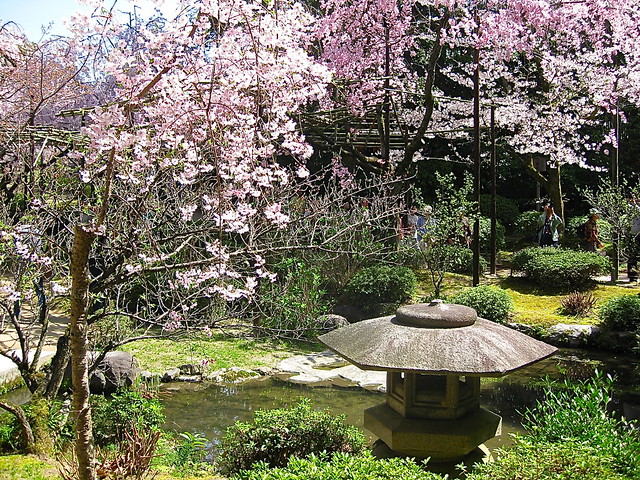 Heian Shrine cherry blossom