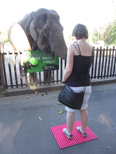 lena elephant feeding