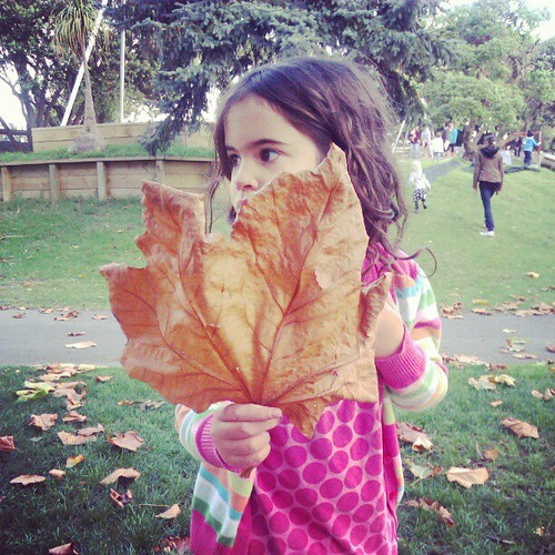 Enamoured with giant Autumn leaves!