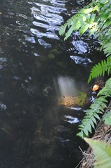 Sunken Gardens, St Petersburg/Tampa bay