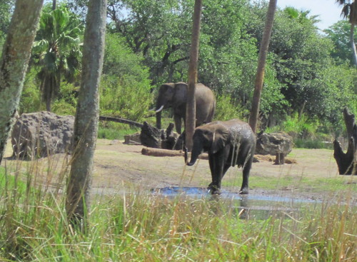 Elephants cooling off