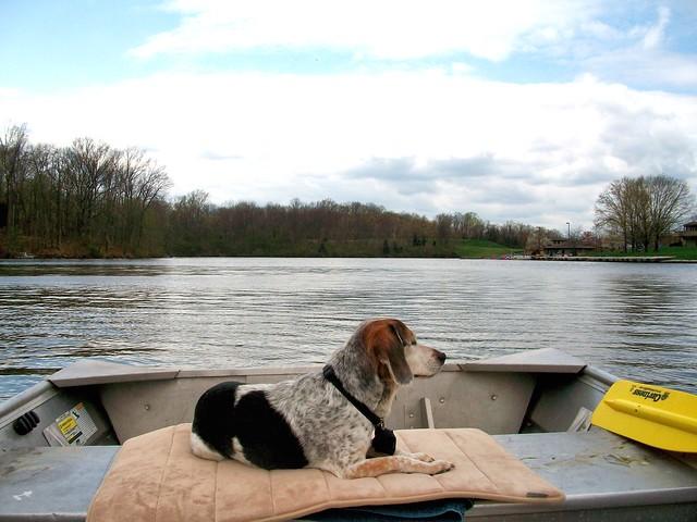 4/12/b  Bear Boating