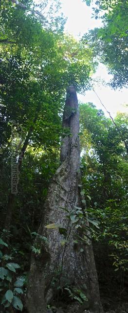 naturist 0017 Palenque, Chiapas, Mexico