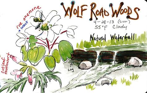 20130428_wolf_road_woods_sketch