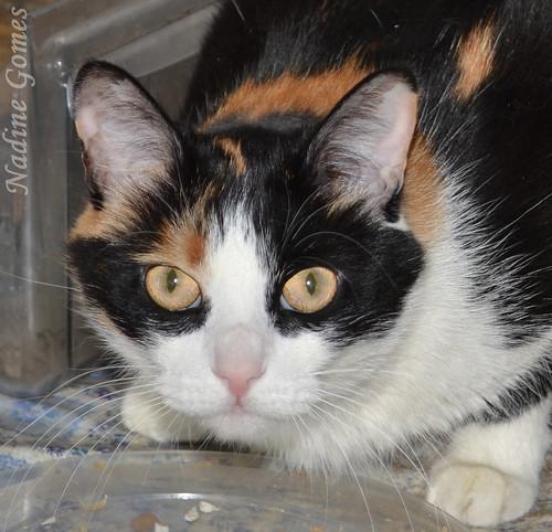 Cat Alice
