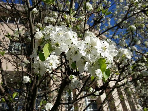 20130412_Spring_Flowers_012