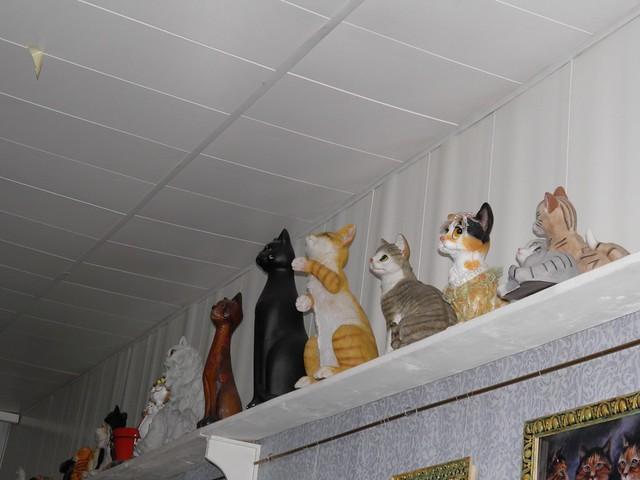 Cat Museum (5/6)