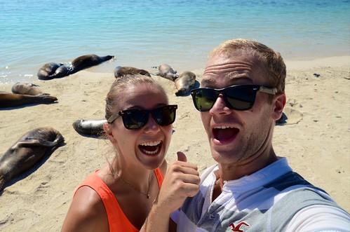 Look, sea lions!