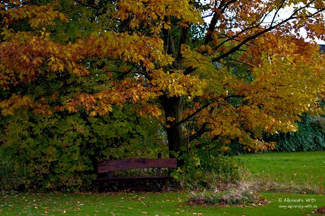 Herbst by Alexandra Wirth