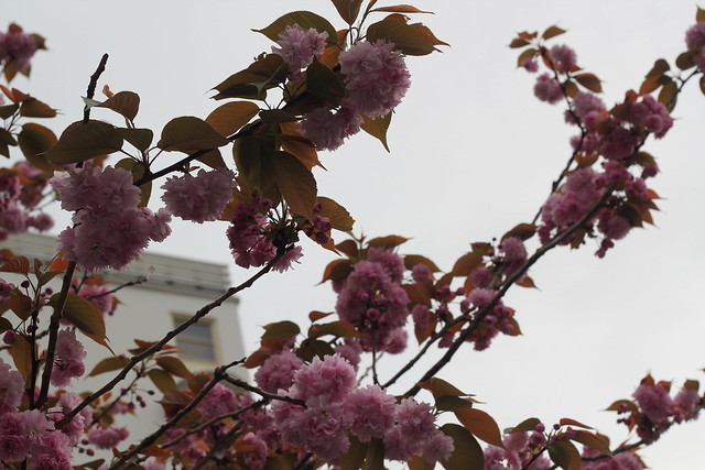 Tuesday: birthday blossoms